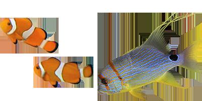 seattle aquarium map with Claytonaquariums on Bellharbormarina also Claytonaquariums also 6094763149 as well 7 ec 9b 94  ec 8b 9c ec 95 a0 ed 8b 80  ed 8f ac ec 9d b8 ed 8a b8  eb 94 94 ed 8c 8c ec 9d b4 ec 96 b8 ec 8a a4  eb 8f 99 eb ac bc ec 9b 90  eb b0 8f  ec 88 98 ec a1 b1 ea b4 80point Defiance Zoo besides Toronto 180 And Housing Market Shows City Set Its Years.